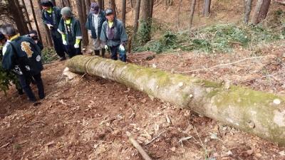 ~~無事伐採。こちらの樅の木で御柱2本が調達できそうです~~